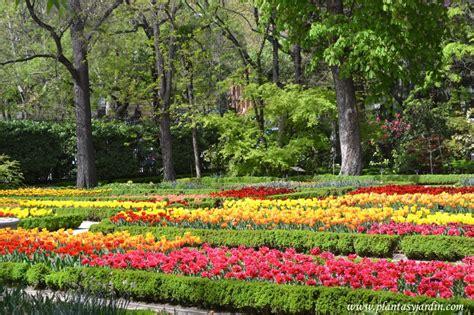 venta de plantas para jardin tulipas o tulipanes clasificaci 243 n plantas y jard 237 n