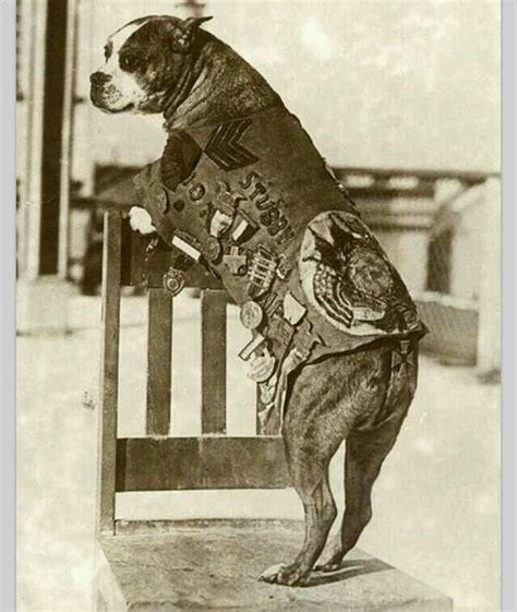 Sgt Stubby Breed 204 Best Images About Let Slip The Dogs Of War On Soldiers Service Dogs And