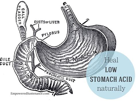 Stomach Acid In Stool by 17 Best Images About Iona Jean On Foods