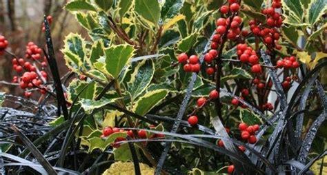piante invernali da giardino piante invernali da esterno piante da giardino piante