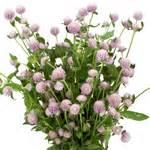 new at fiftyflowers fresh lavender lavender gomphrena fresh flowers