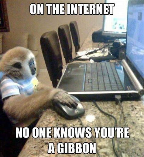 Web Meme - monkey meme gibbon internet memes comics