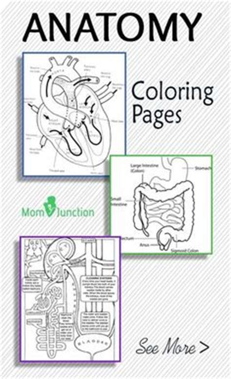 anatomy coloring book flash cards anatomy flash cards print and practice absolutely
