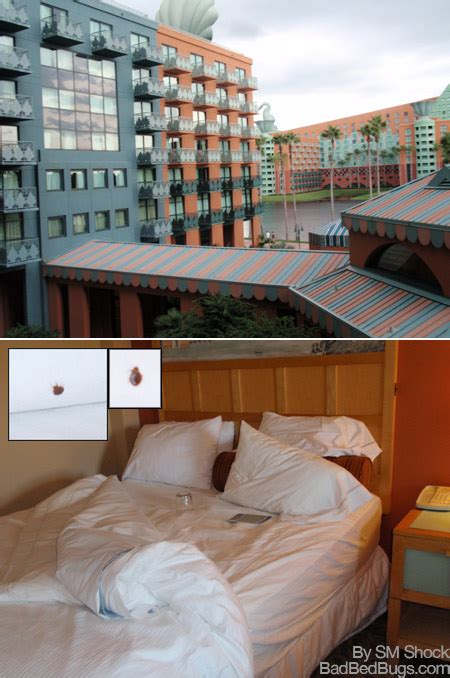 great wolf lodge williamsburg bed bugs hotel bed bugs compensation image search results
