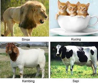 contoh hewan melahirkan  ciri ciri  daftar nama