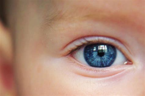 infant eye color baby blues eye color a moment of science indiana