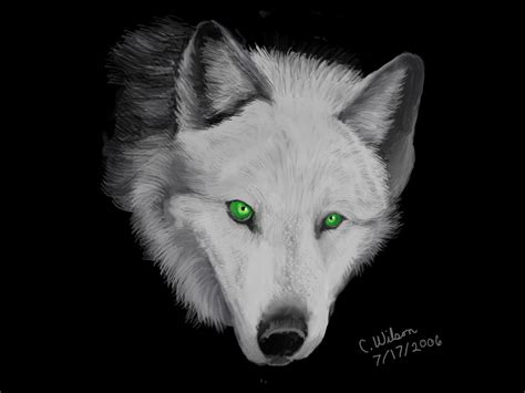 Silver Wolf the wolf lands a realistic wolf rp sign ups wolf
