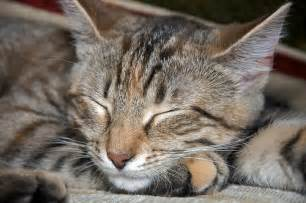 nukkuva kissa flickr photo sharing