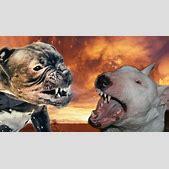 Dogo Argentino ...