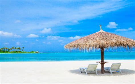 maldives indian ocean sun loungers  palm trees straw