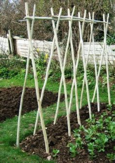 Building A Garden Trellis support what is the best method for trellising green