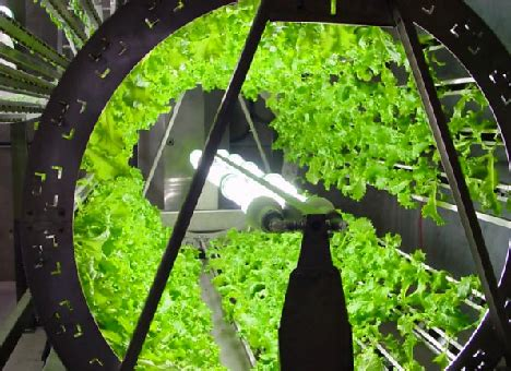 hydroponics   benefits  growing hydroponically