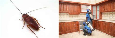 como eliminar cucarachas de la cocina genial eliminar cucarachas cocina galer 237 a de im 225 genes
