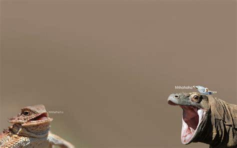 Lizard Meme Hehehe - tony turtle gif find share on giphy