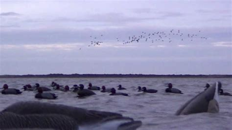curtain blind duck hunting curtain blind hunting ocracoke nc russel williams guide