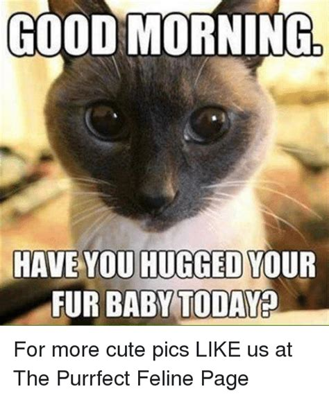 Cute Good Morning Meme - good morning have you hugged your fur baby today for more cute pics like us at the purrfect