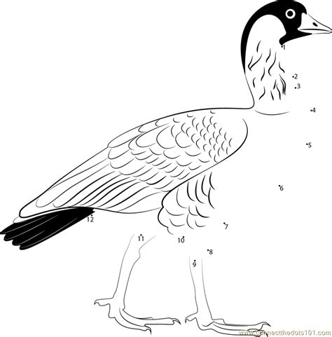nene bird coloring page perfect nene goose coloring page elaboration exle