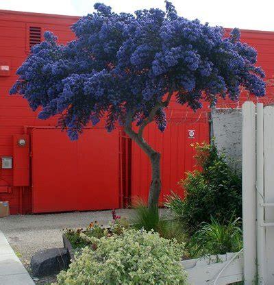 alberi piccoli da giardino 16 alberi ideali per piccoli giardini