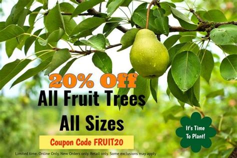 what time of year do you plant fruit trees 20 fruit trees all sizes time to plant