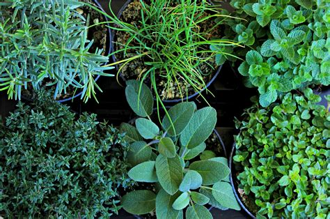 giardino piante aromatiche tavoli ikea giardino con giardino di piante aromatiche
