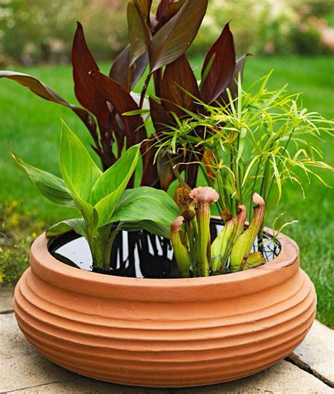 containers for water gardens easy diy container water garden