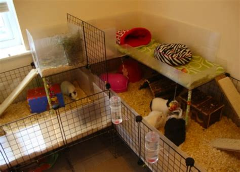 Rabbit Hutch Cover Guinea Pigs Ages 8 Amp Under