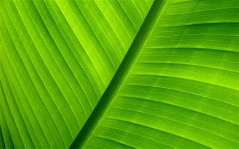 wallpaper green background green background wallpaper 432774