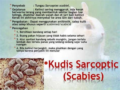 Salep Scabicid ppt hama dan penyakit pada kelinci powerpoint