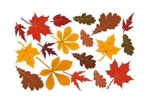 fall leaves set wall decal beautiful autumn decor fleur lis leaf sticker decorative art