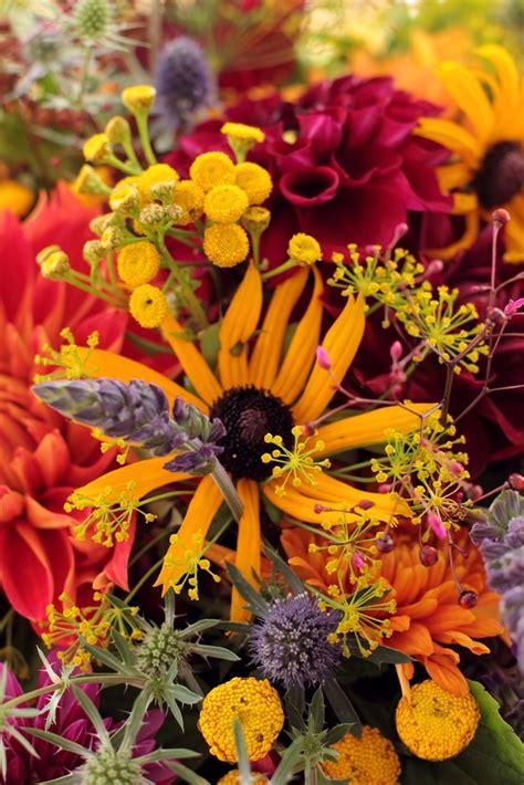 autumn flower october flowers autumn in zen lifestyle pinterest