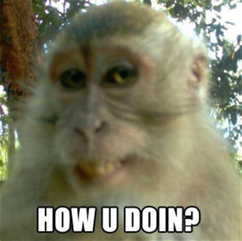 Monkey Meme - baboon congress memes