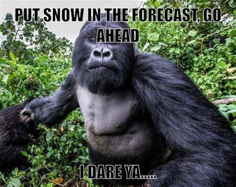 Funny Gorilla Memes - my mematic meme funny pictures pinterest meme