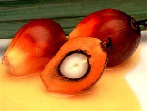 Minyak Kelapa Sawit Per Ton berita sawit harga cpo rm 2 800 ton