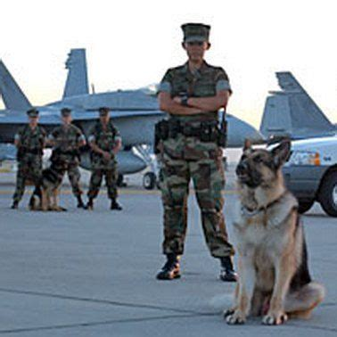 animals salute to k 9s on 46 pins