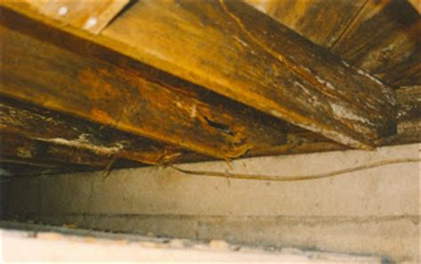 Repair Floor Joist American Basement Solutions How To Fix And Repair Floor Joist Rot