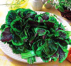 Harga Bibit Wortel Unggul benih bayam belang tiger spinach