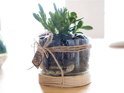 best plants for closed terrariums how to make a terrarium realestate au