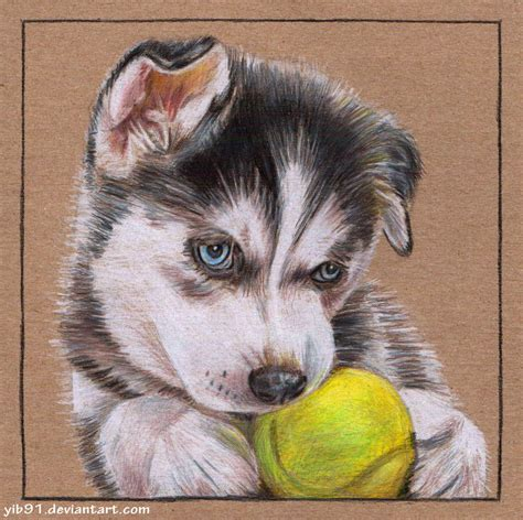 husky puppy drawing siberian husky puppy by yib91 on deviantart