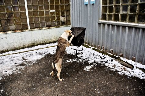Clean Home by Dogs Of Chernobyl Clean Futures Fund