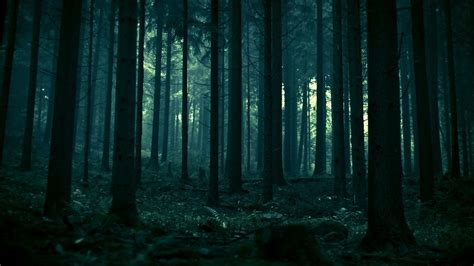 wallpaper new dark new dark forest wallpaper dodskypict