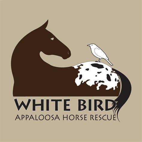 white rescue guidestar exchange reports for white bird appaloosa rescue