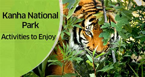 10 Free Activities To Enjoy by 10 Best Things To Do In And Around Kanha National Park