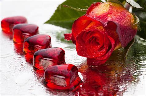 imagen de amor de una rosa con corazones rosados im 225 genes de corazones con frases de amor con movimiento y