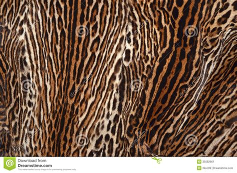pin texture skins backgrounds on ocelot skin texture stock image image of detail wildlife 35582661