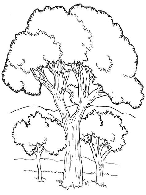 coloring book pages of trees trees coloring pages download and print trees coloring pages