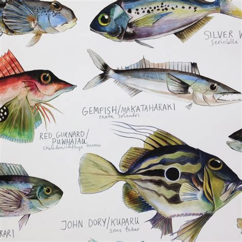 printable fish poster fish species of new zealand poster by giselle clarkson nz
