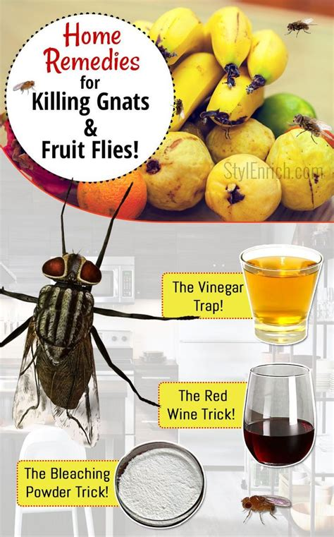 home remedies for house flies 25 best ideas about killing gnats on pinterest killing
