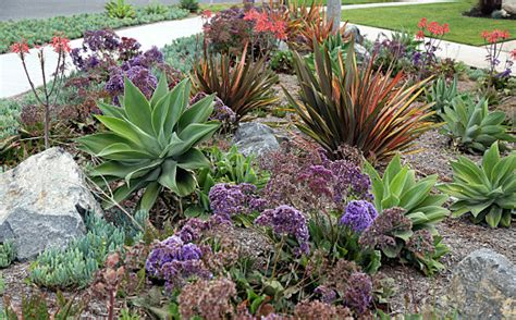 xeriscape design definition city of fort collins offers xeriscape garden party in july