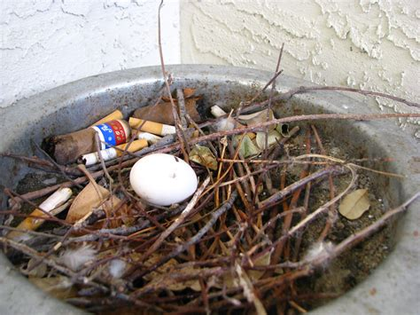 Do When You Build A Nest by Facts About Nests Celebrate Birds