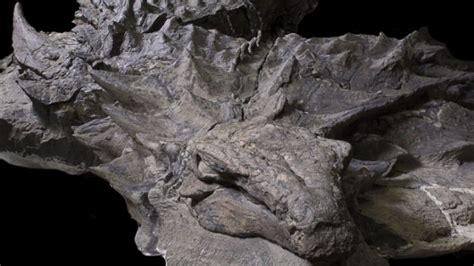 Lihat Film Dinosaurus | wow lihat fosil dinosaurus 110 juta tahun ini pasti kamu